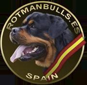 Rotmanbulls